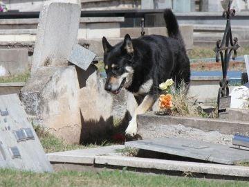 El perro 'Capitán' en una imagen de archivo