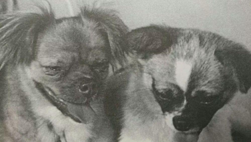 Little Leopard y Shan Shan, los dos perros enviados al espacio por China