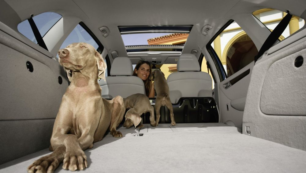perros-coche_hd_42639.jpg