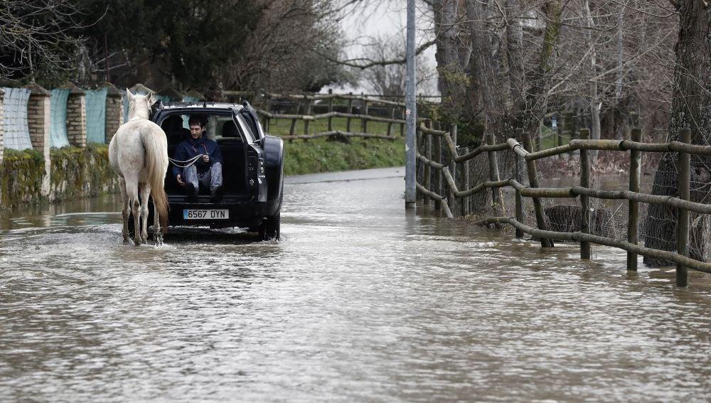 Un joven montado en un vehículo ayuda a un caballo a pasar por una carretera inundada