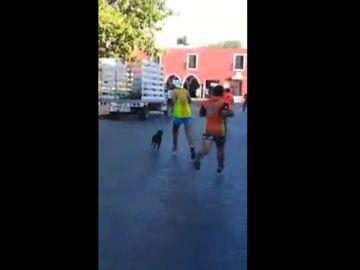 Brutal agresión a un perro en la maratón de Valladolid