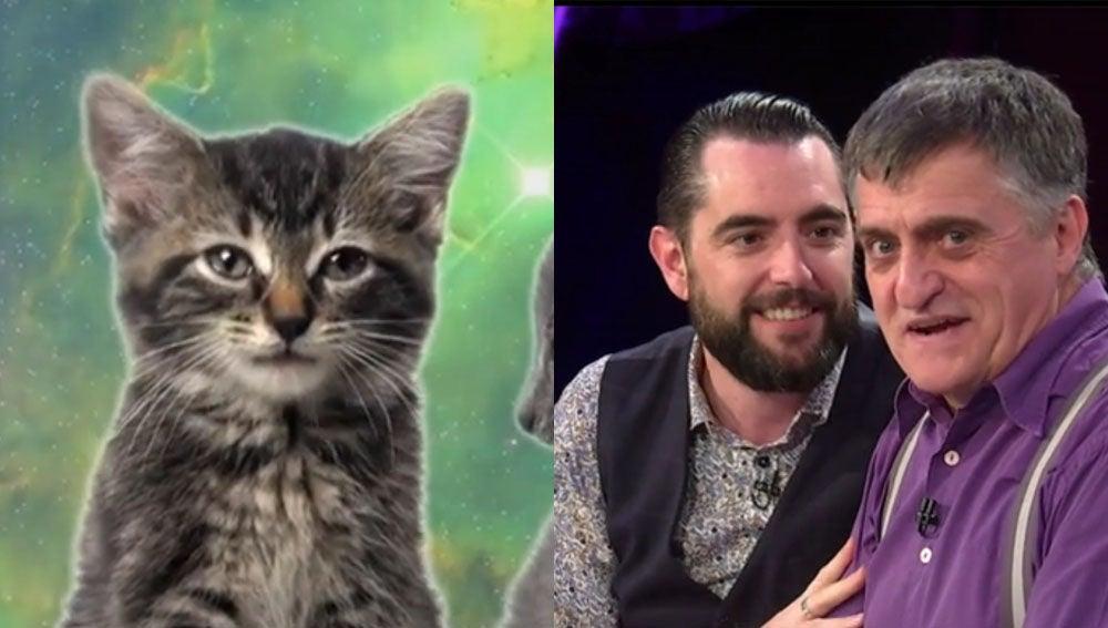 Dani Mateo tras ver un vídeo de gatos