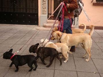 Paseo de perros
