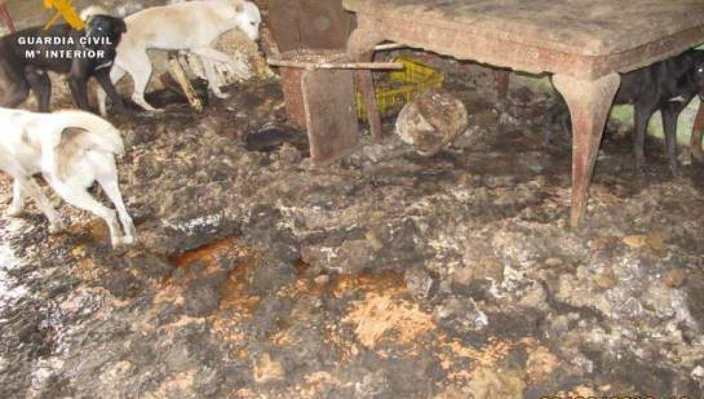 Animales hacinados en condiciones insalubres