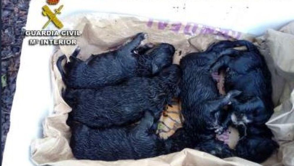 Los cachorros de perro recién nacidos