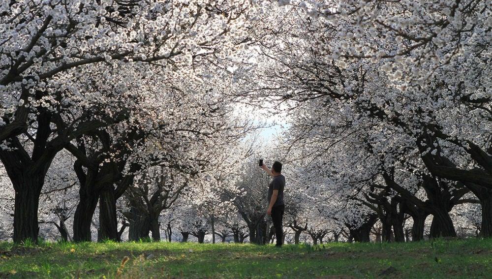 Imagen de archivo de árboles en flor