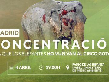Pacma ha convocado una concentración por los elefantes de Albacete