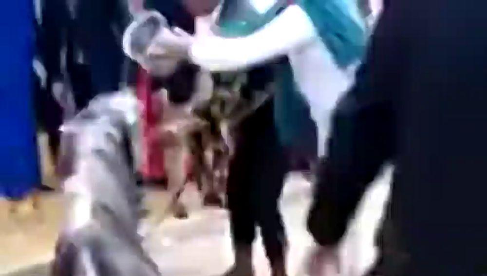 Denuncian al propietario del caballo que murió en la Feria de Abril de Sevilla por no alimentar al animal en todo el día