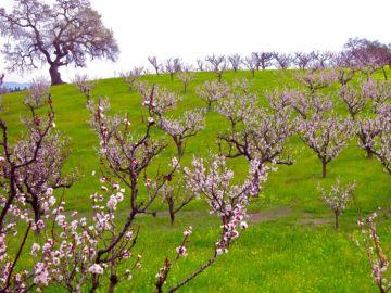 Imagen de varios árboles en flor
