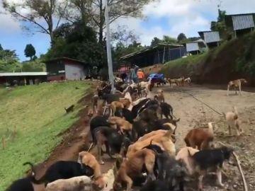 Cientos de perros alimentados al mismo tiempo