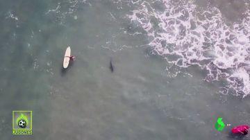 SUSPENDEN UN TORNEO DE SURF POR EL ATAQUE DE TIBURONES