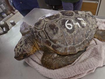 Imagen de archivo de una tortuga