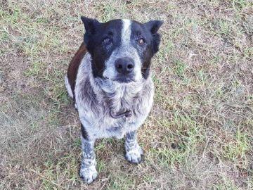 Max, el perro que ayudó a encontrar a la pequeña Aurora