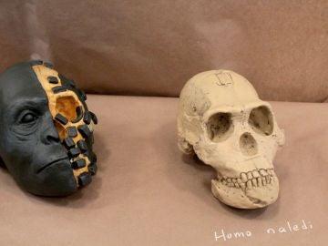 Homo naledi, una nueva especie de homínido