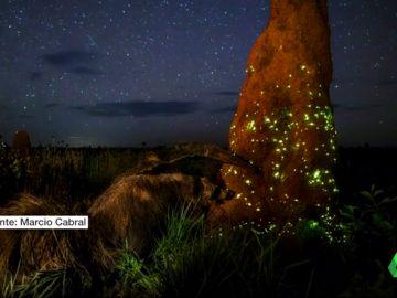 Descalifican a un ganador mundial de fotografía por utilizar un animal disecado