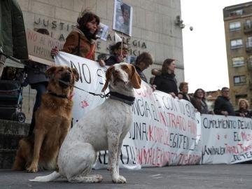 Defensa de los animales
