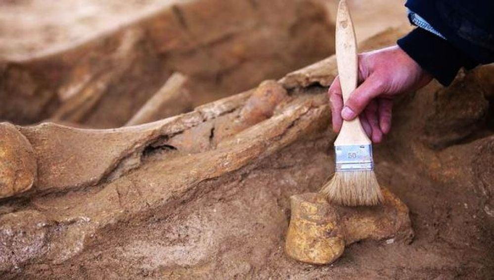 Un arqueólogo trabajando