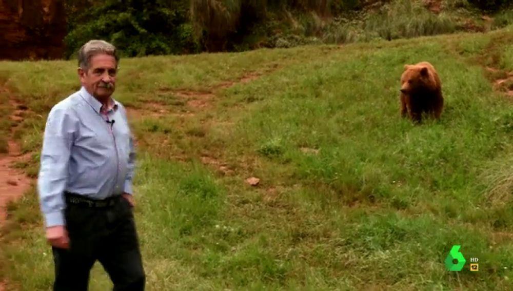 """La """"apasionante"""" historia de Miguel Ángel Revilla y Furaco, el oso que llegó a Asturias para salvar a su especie"""