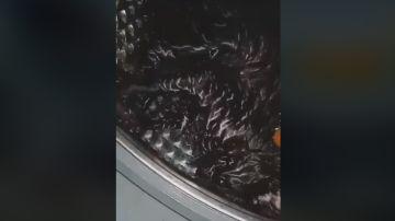 Fragmento del vídeo compartido por Pacma