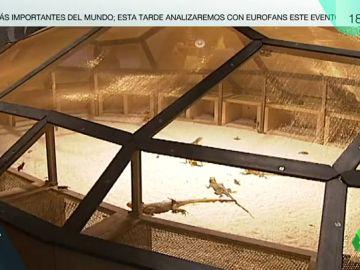 Lagartos en el Museo Guggenheim