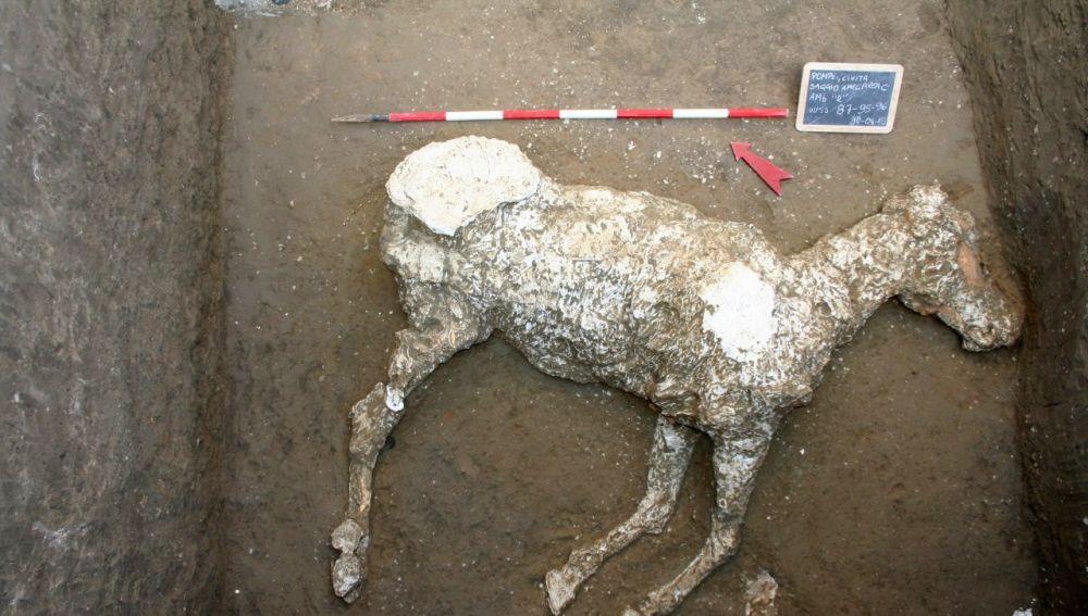 Un caballo sepultado en unas cuadras desde la erupción que acabó con la urbe en Pompeya