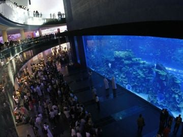 Nadar con tiburones en Dubai