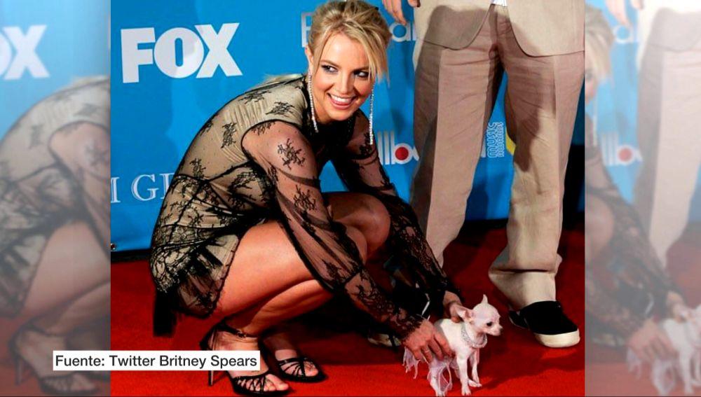 Britney Spears y su perro con un collar de Swarovski