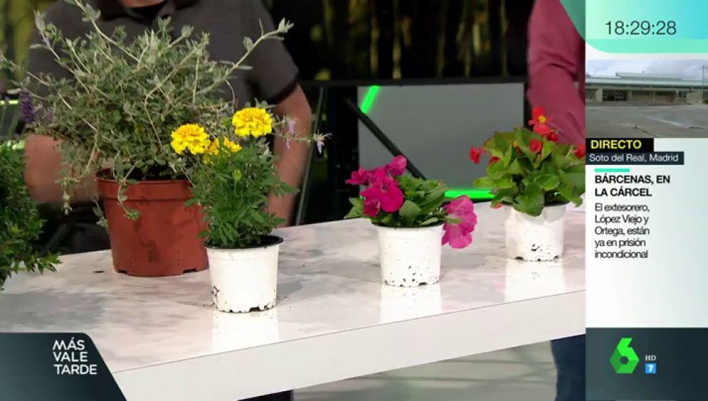 ¿No se te da bien cuidar plantas? Te contamos trucos y consejos y cuáles son las mejores según las estaciones del año