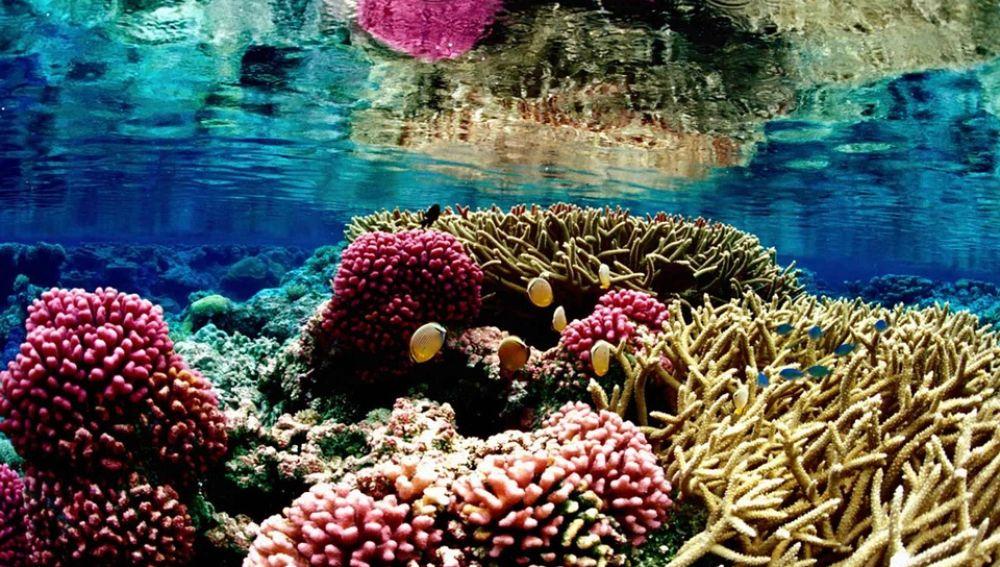 Los arrecifes de coral reducen a la mitad los danos de las inundaciones