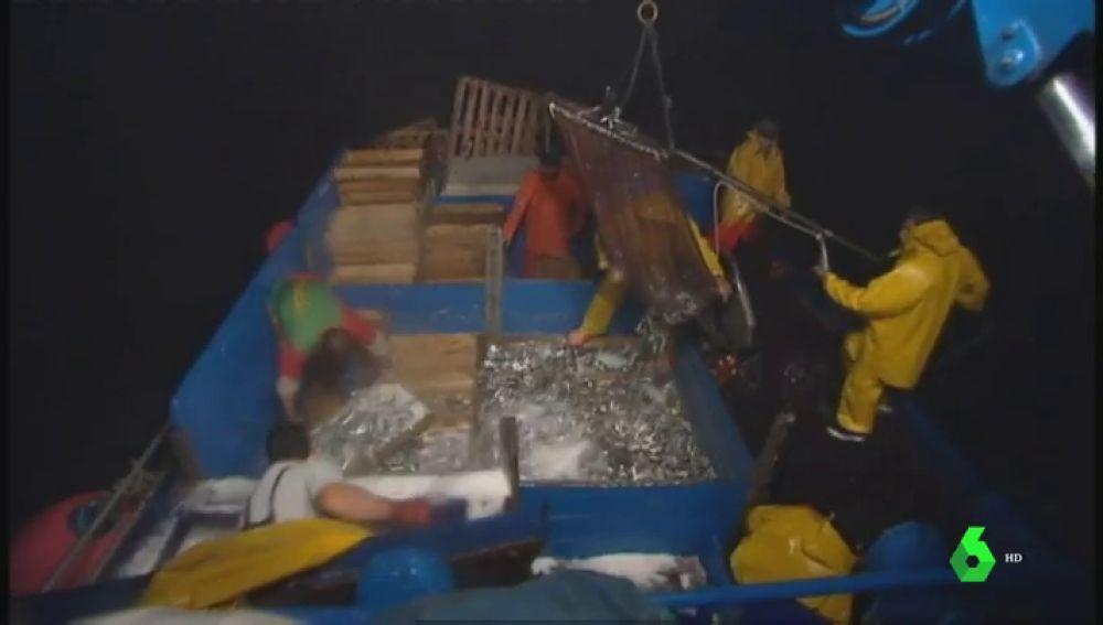 Los pescadores inician la campaña de captura de la sardina