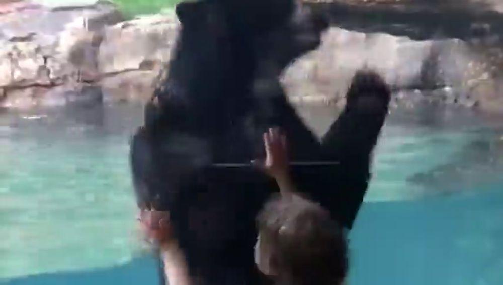 El divertido juego de imitación entre un niño de cinco años y un oso en el zoo