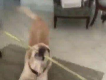 Una mujer no puede entrar en casa y su perro le soluciona el problema