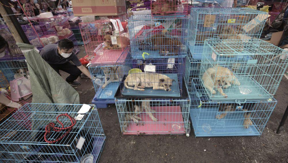 Miles de personas firman una petición para que deje de celebrarse el festival anual de carne de perro en China