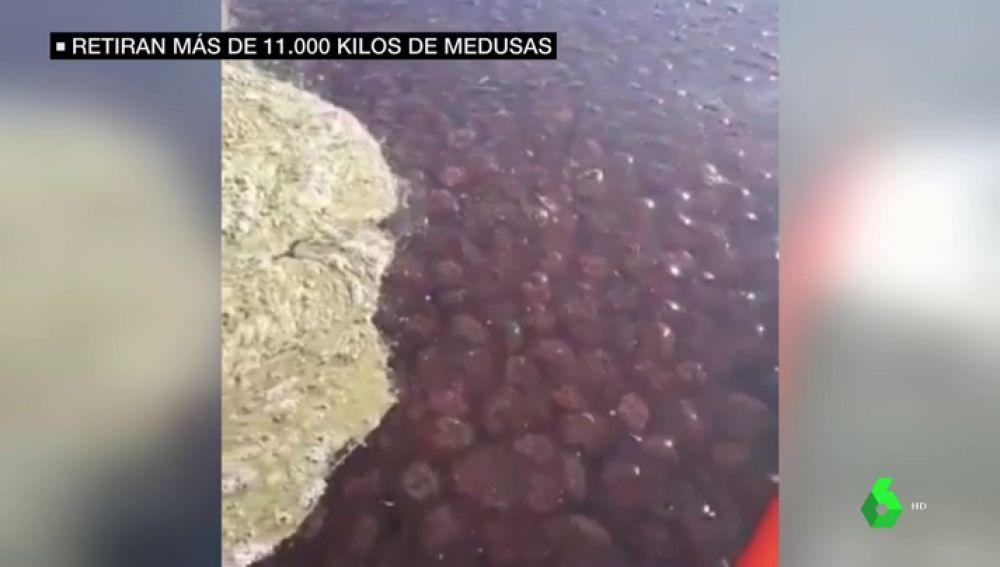 Retiran 11.000 kilos de medusas que han invadido las playas de la costa de Málaga y de Granada