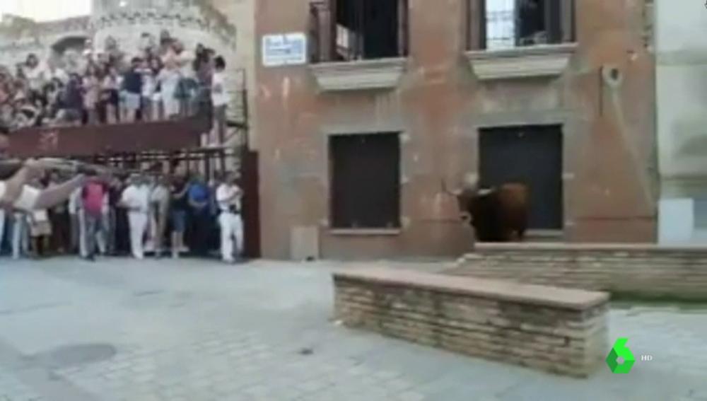 Matan a tiros y en público al 'toro de Coria'