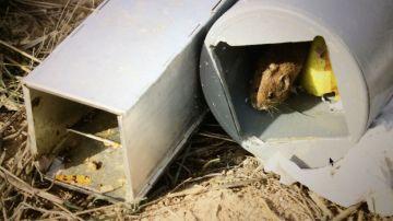 Un metodo monitoriza con precision poblaciones de pequenos mamiferos