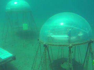 Cultivar plantas en los fondos marinos: una nueva iniciativa con resultados sobresalientes
