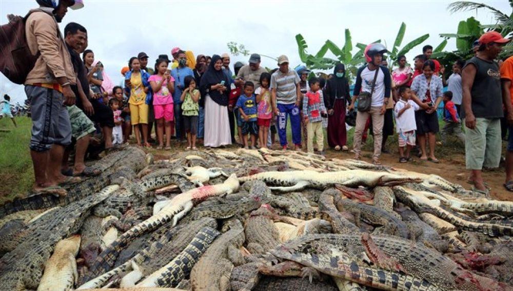 Masacran a 292 cocodrilos para vengar a su vecino (FOTOS)