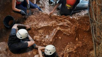 Esqueleto de rinoceronte hallado en Castelldefels