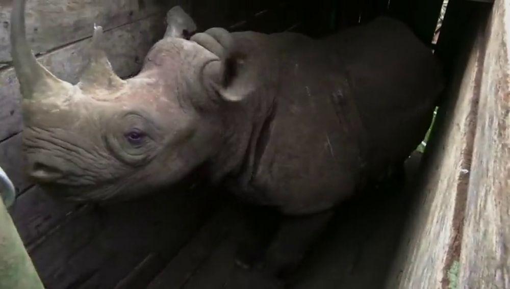 Imagen de archivo de un rinoceronte