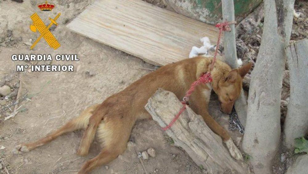 Las condenas por delitos ambientales y maltrato animal aumentaron en 2017