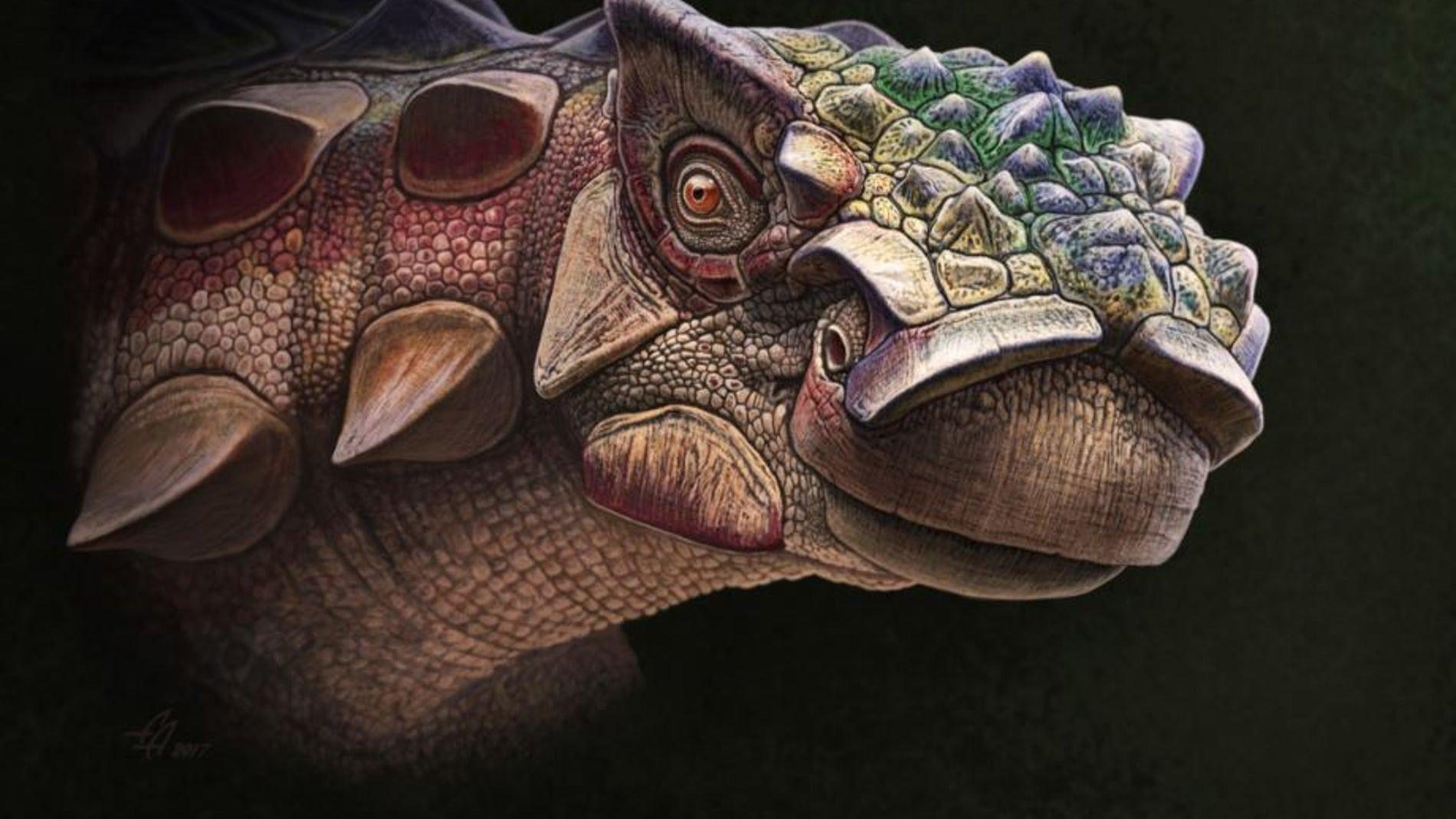 El hallazgo de un nuevo anquilosaurio arroja luz sobre su origen