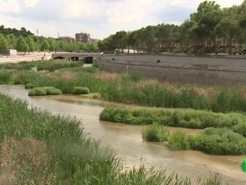 Los ríos españoles quieren recuperar su aspecto original