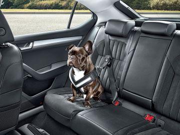 Tu mascota en el coche