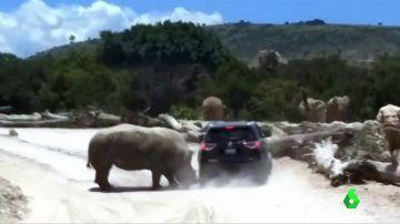 Un rinoceronte embiste a un coche con una familia dentro en un parque de México