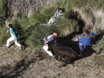 Dos corneados y ocho vacas escapadas en el encierro del Pilón de Falces