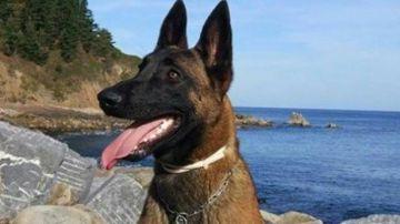 Eno, el perro de la Unidad de Rescate que había desaparecido