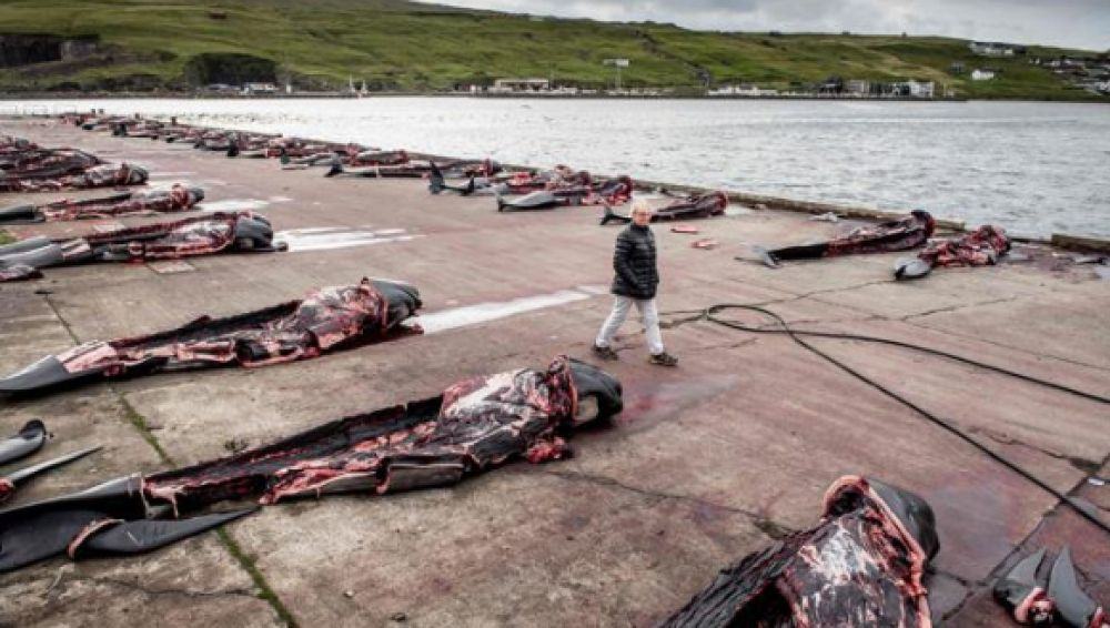 Matanza de ballenas