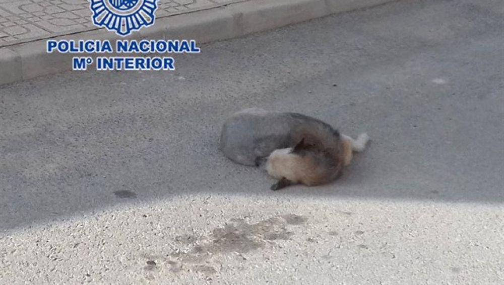 Imagen de un perro atropellado