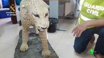 La Guardia Civil investiga a un vecino de Sevilla tras encontrar en su casa animales protegidos disecados